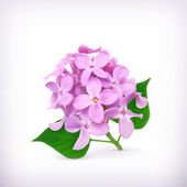 Lilac flowers, vector — Stock Vector