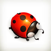 Ladybug vector icon — Stock Vector