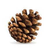 Pine cone vector illustration — Stock Vector