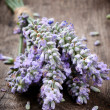 Bunch of fresh lavender - Stock Photo