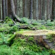 Large tree stump in summer forest - Stock Photo
