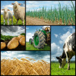 Agriculture collage - Stock Photo