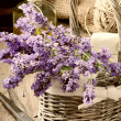 Stock Photo: Bunch of freshly cut lavender