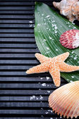 Sea shell border with green leaf — Stock Photo