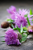 Scottish thistle flower — Stock Photo