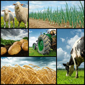 Agriculture collage — Foto Stock