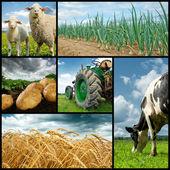 Jordbruk collage — Stockfoto