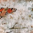 Butterfly on spring cherry tree - Foto Stock
