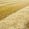 Dry agricultural field — Stock Photo