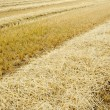 Dry agricultural field - Stock Photo