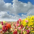 Colorful summer field with flowers — Stock Photo