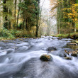 Forest stream — Stock Photo #12727703