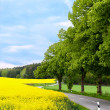 Stock Photo: Country road making curve