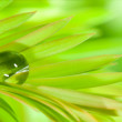 Stock Photo: Leafs with raindrop