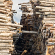 Stock Photo: Stacks of logs