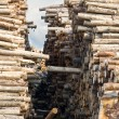 Stacks of logs - Stock Photo