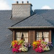 Foto de Stock  : Windows on rooftop