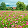 Flower field — Stock Photo #12727868