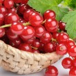 Red currant in the basket - Stock Photo