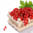 Small wooden crate full of red currant - Stock Photo