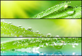 Banners - Grass with dewdrops — Stock Photo