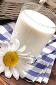 Glass of milk with daisy — Stock Photo