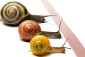 Snails racing — Stock Photo