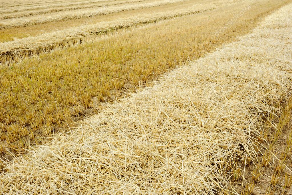 Dry agricultural field after harvest — Stock Photo #12727655