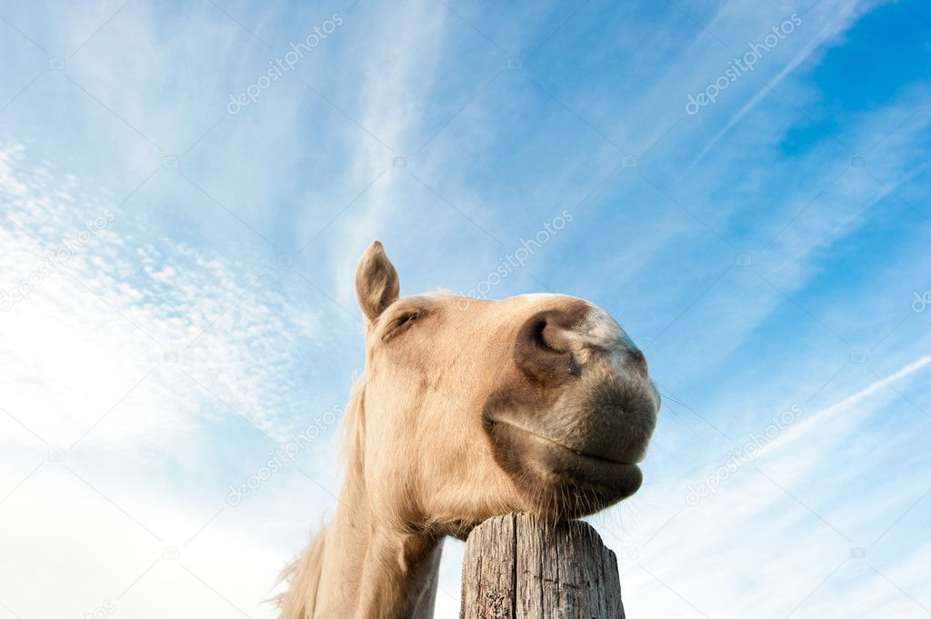 Dreaming horse at sunny day — Stock Photo #12727680