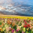 Colorful summer field — Stock Photo