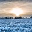 Sunset over a frozen field — Stock Photo