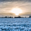 Sunset over a frozen field - Stock Photo