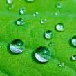 Dewdrops - Stock Photo