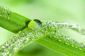 Dewdrops on the grass leafs — Stock Photo