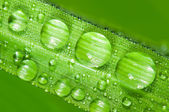 Dewdrops — Stock Photo