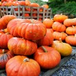 Pile of pumpkins for sale. Shallow DOF — Stock Photo