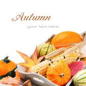 осенний натюрморт с тыквы и кукурузой — Стоковое фото