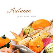 Autumn still-life with pumpkins and corn — Stock Photo