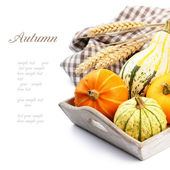 Autumn still-life with pumpkins — Stok fotoğraf