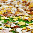 Autumn leaves on green grass. Shallow DOF — Stock Photo