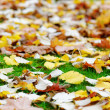 Autumn leaves on green grass. Shallow DOF - Stock Photo