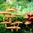 Mushrooms in autumn forest - Stok fotoğraf
