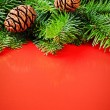Branches of Christmas tree with pine cones on festive red backgr - Stockfoto