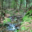 Forest stream — Stock Photo #19076067
