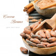 Cocoa beans and powder — Stock Photo