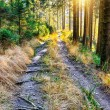 Forest pathway — Stock Photo #20000883