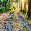 Forest pathway - Stock Photo