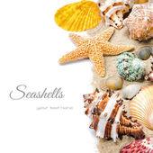 Colorful seashells on sand — Stock Photo