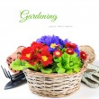colorful flowers in wicker basket — Stock Photo