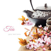 Asian tea pot with cherry blossom — Foto Stock